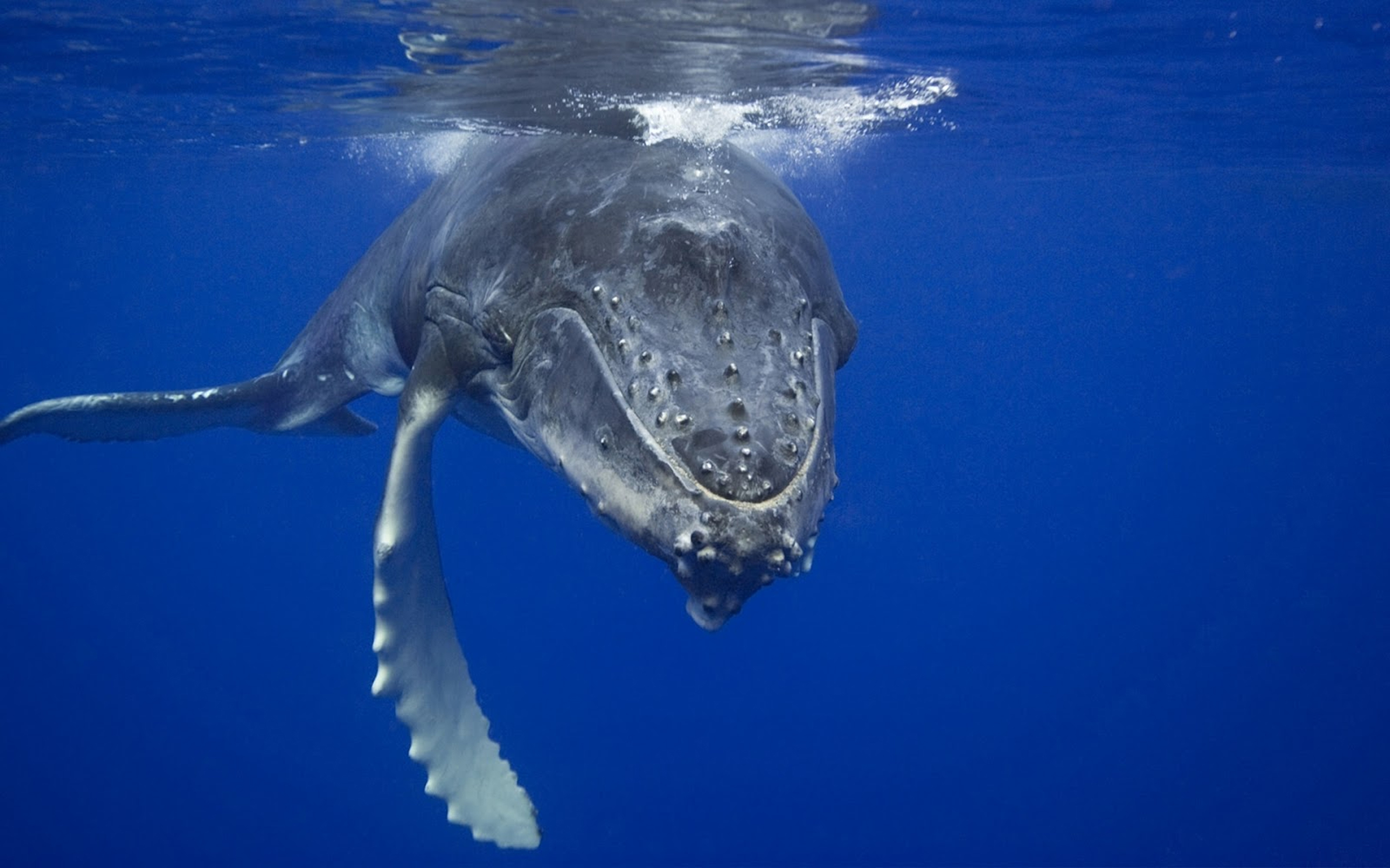 What does a whale and a human have in common?