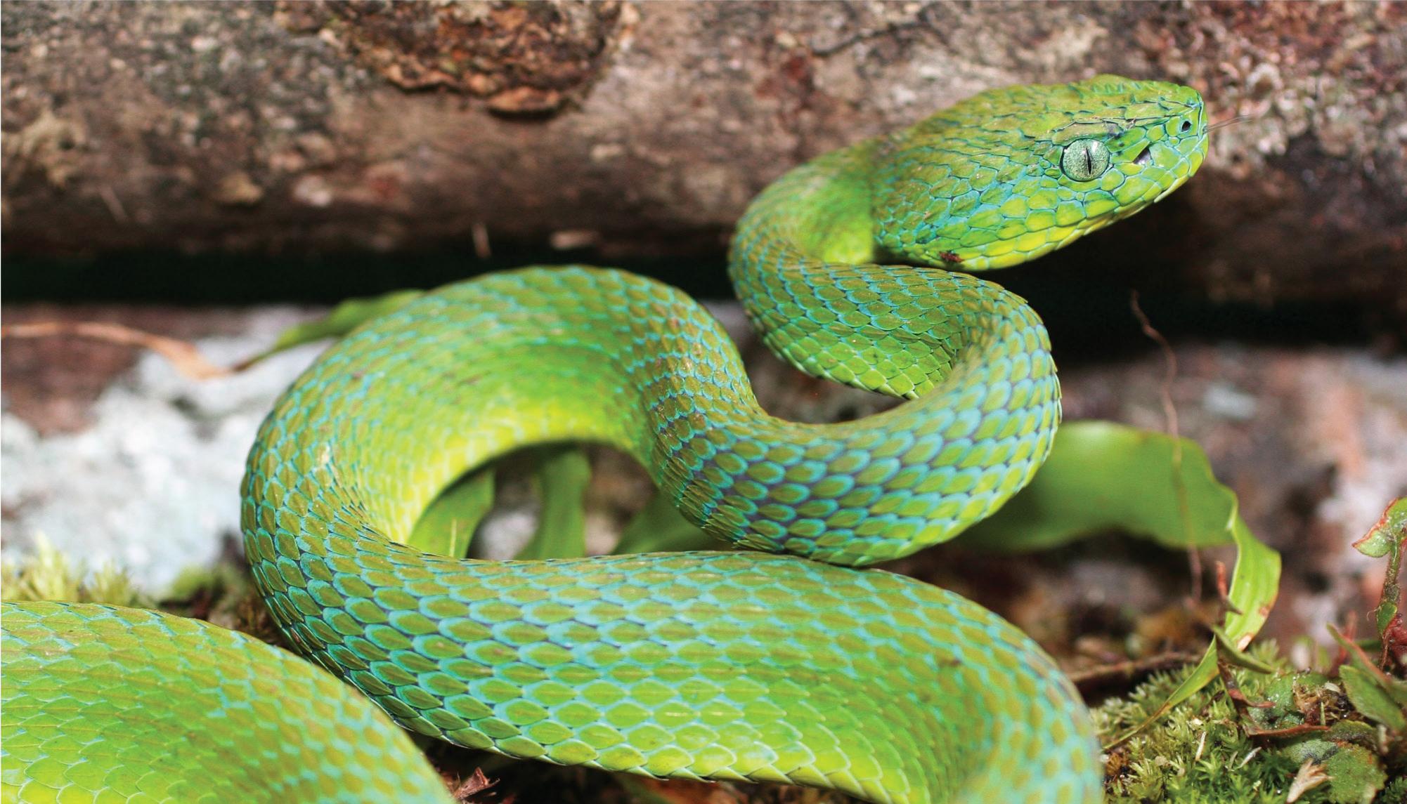 Honduras Forests Animals
