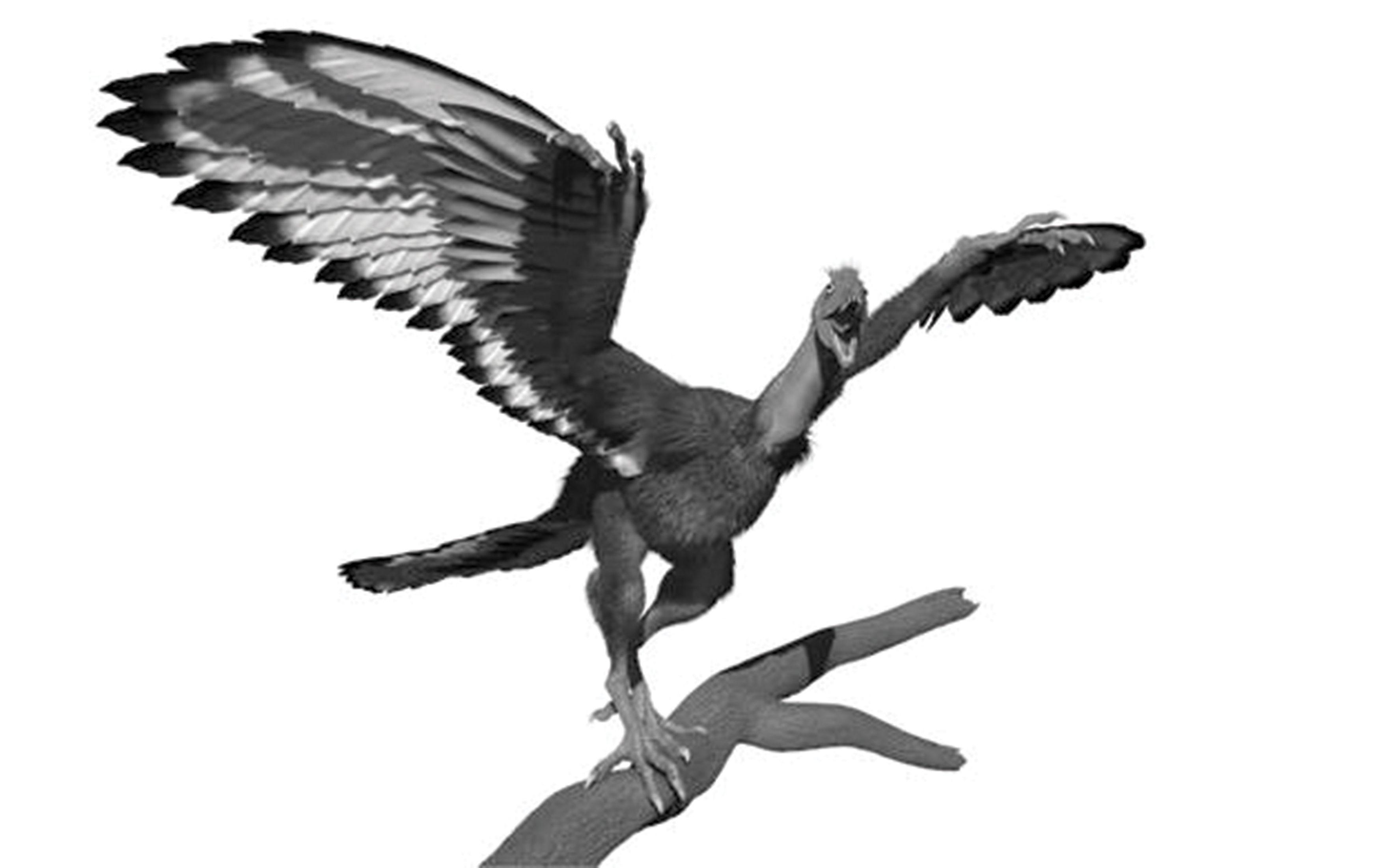 rays reveal new picture of u0027dinobird u0027 plumage patterns