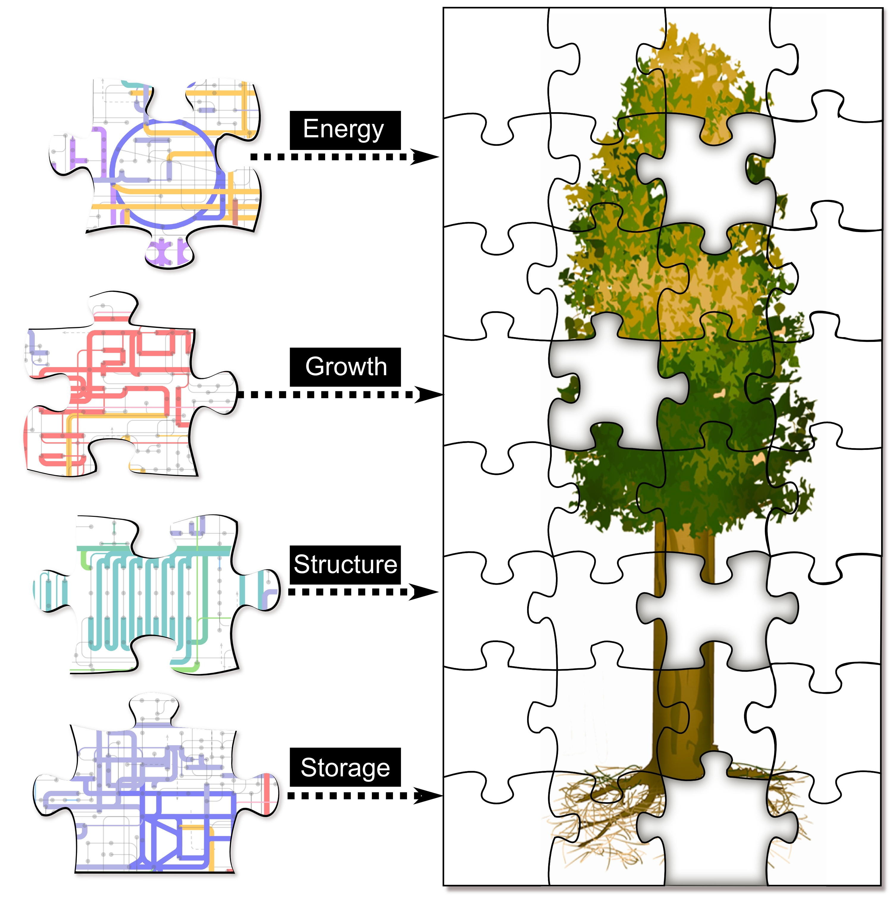 Plant Site Map Examples: 'Zoomable' Map Of Poplar Proteins Offers New View Of