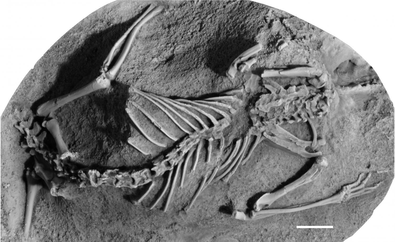 asteroid dinosaur mammals - photo #11
