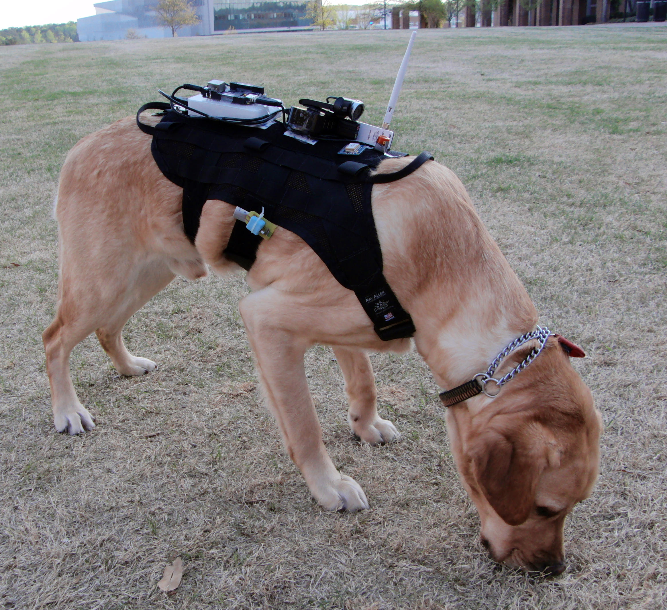Dogs Technology And The Future Of Disaster Response