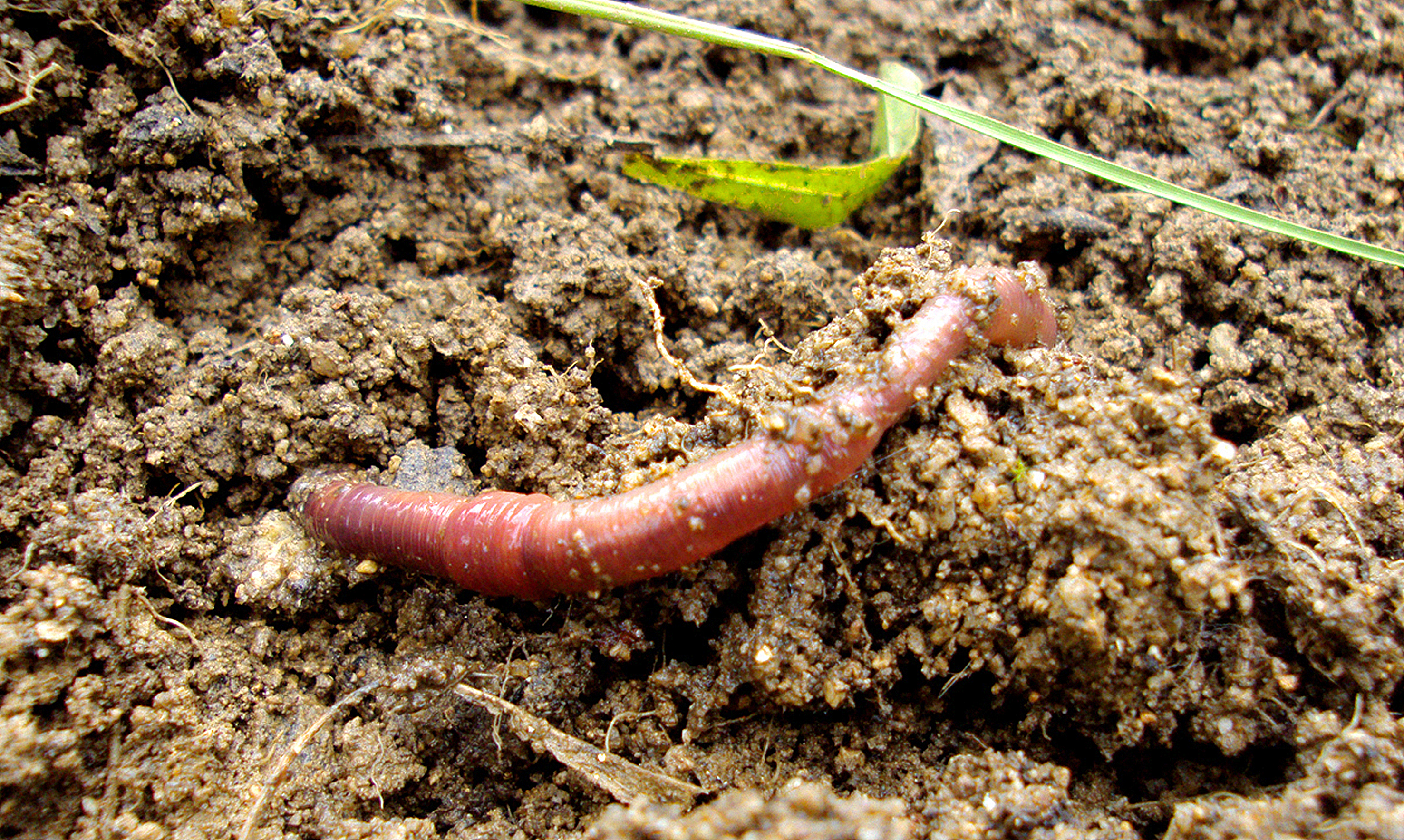 Earthworms ants and termites the real engineers of the for Things in soil