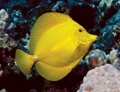 Hawaii At Center Of Battle Over Aquarium Fish