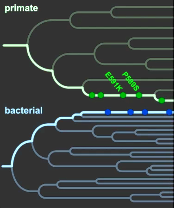 Human dna shows traces of 40 million year battle for survival human dna shows traces of 40 million year battle for survival between primate and pathogen ccuart Choice Image