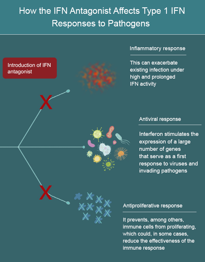Virus-killing molecules may need all their skills, including ...