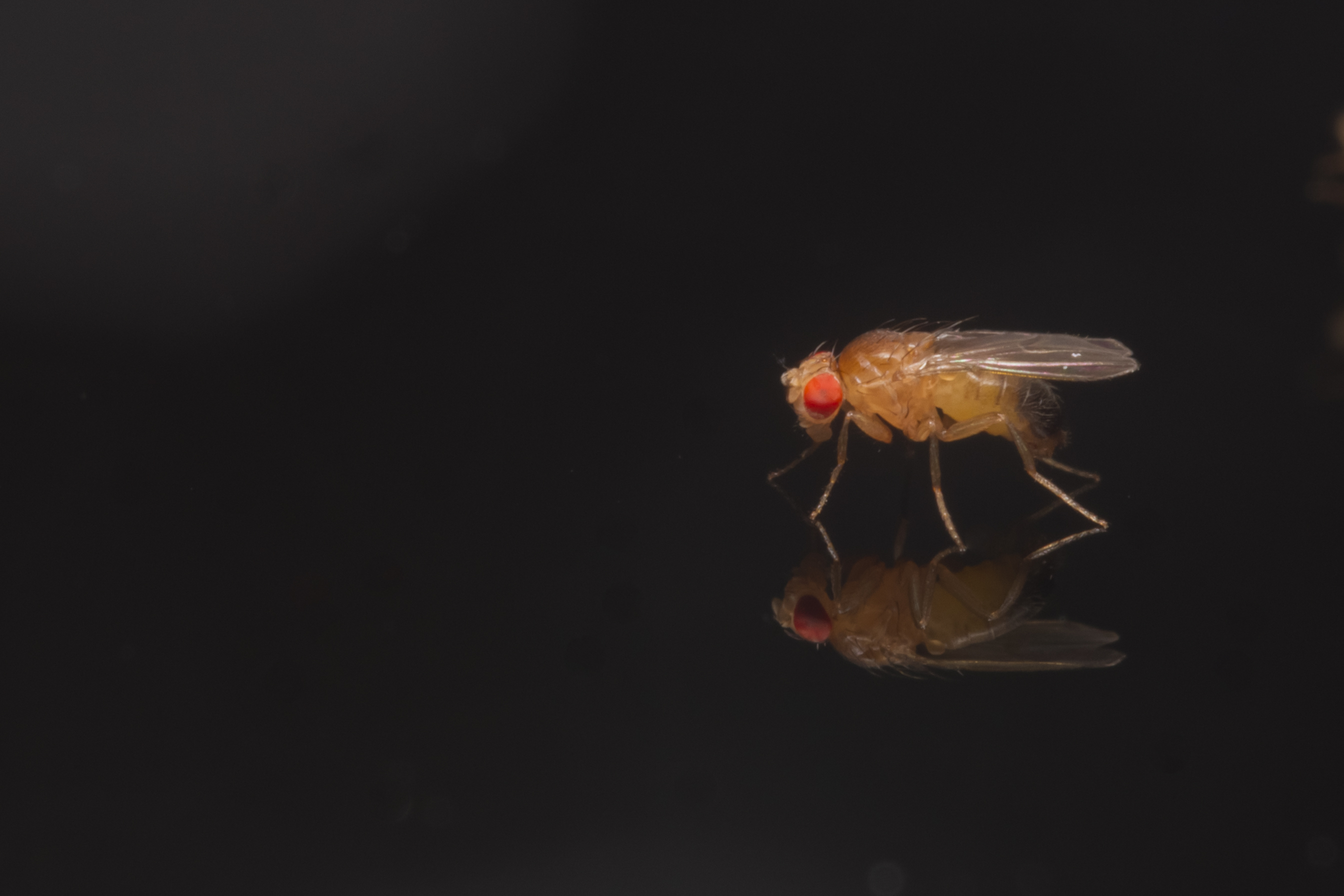 how to attract and kill fruit flies