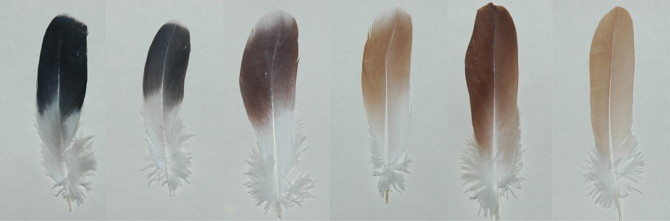 Different bird feathers - photo#38