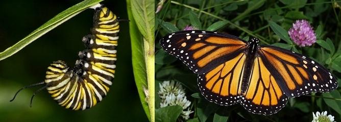 Despite Metamorphosis  Moths Hold On To Memories From