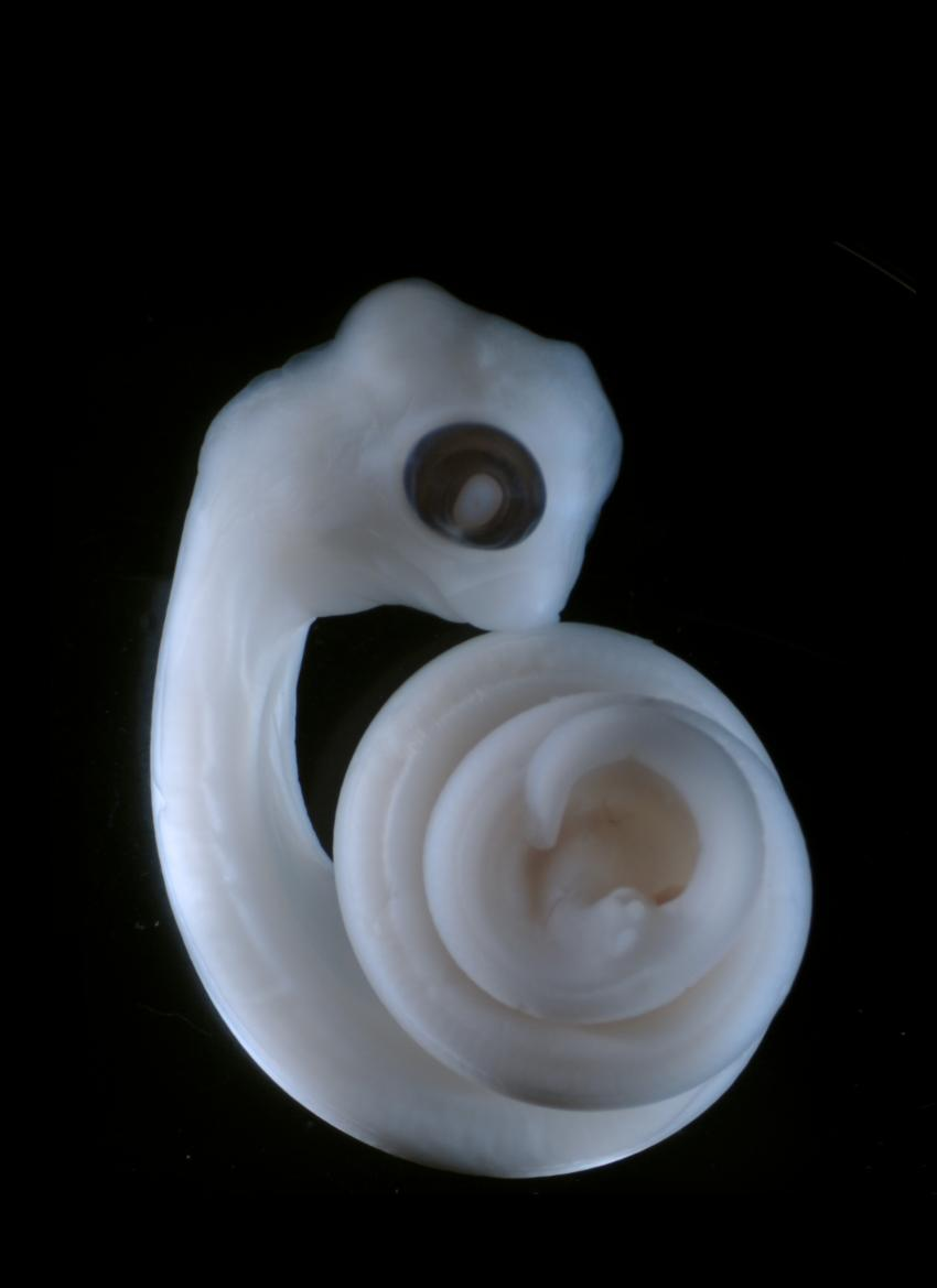 Vestigial Organs In Nature