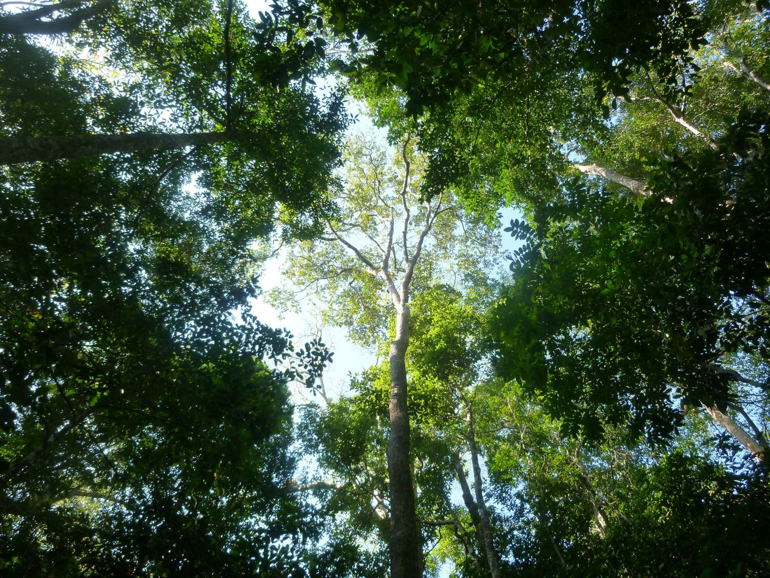 of large animals has catastrophic effects on trees