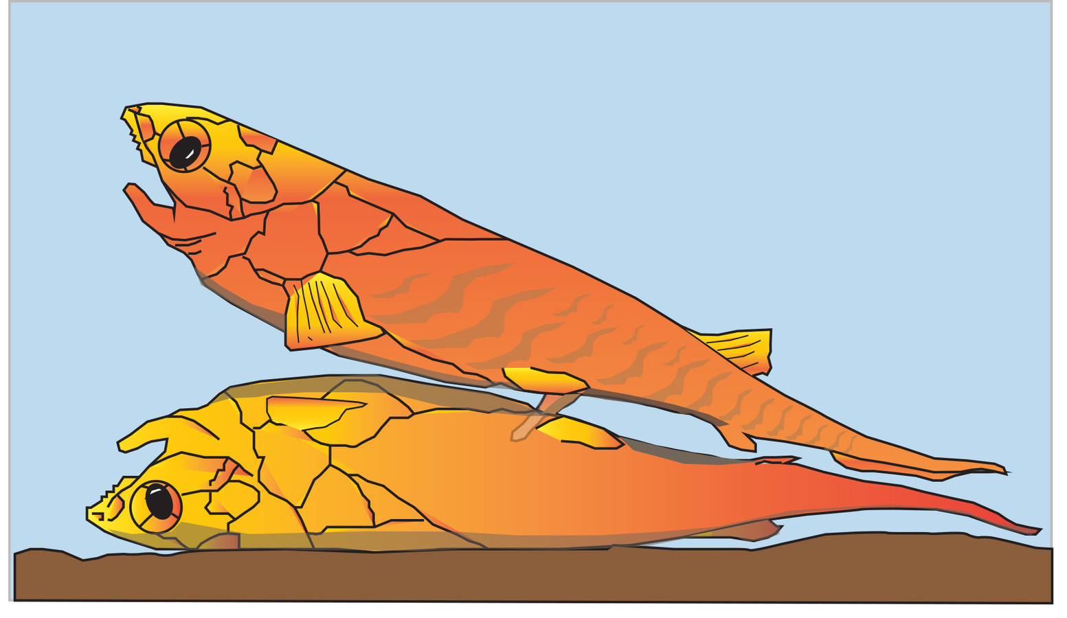 The First Vertebrate Sexual Organs Evolved As An Extra Pair Of Legs