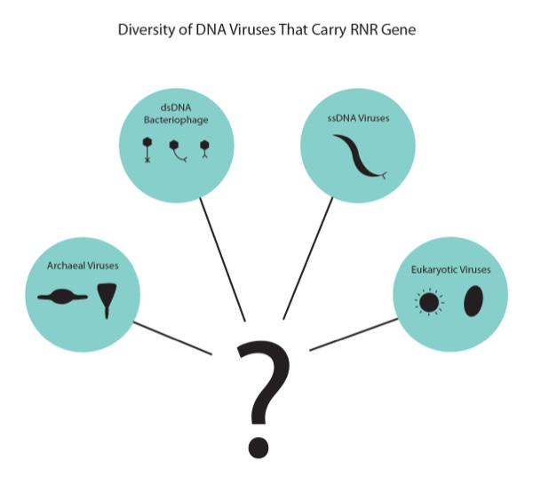 a study on virus discovery evolution and defense A virus is a small infectious agent that replicates only inside the living cells of other organismsviruses can infect all types of life forms, from animals and plants to microorganisms, including bacteria and archaea.
