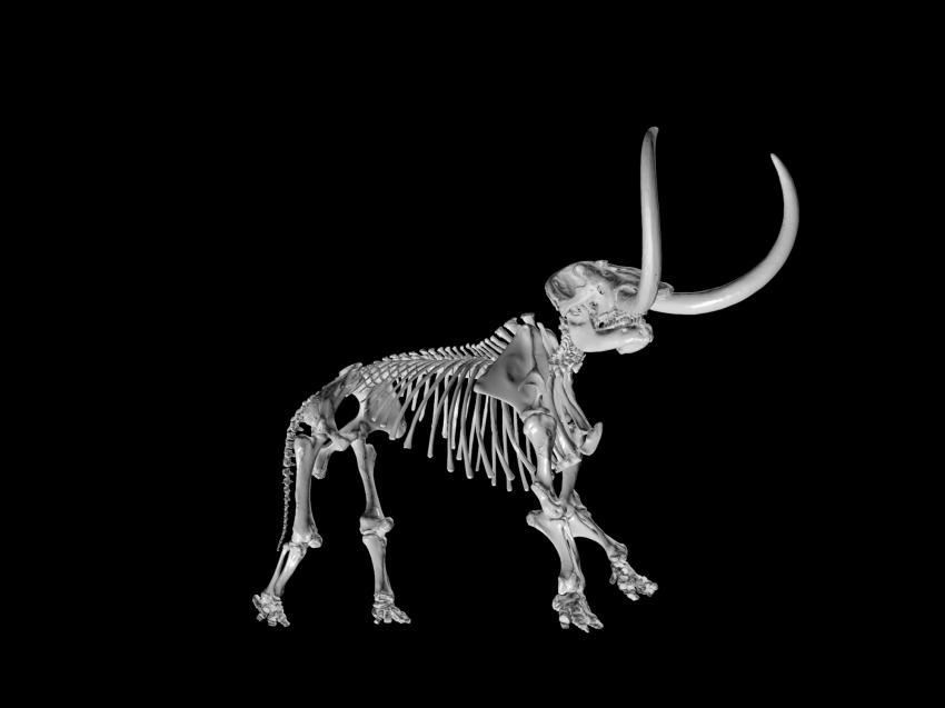 Paleontologists Unveil Online Showcase Of 3 D Fossil Remains