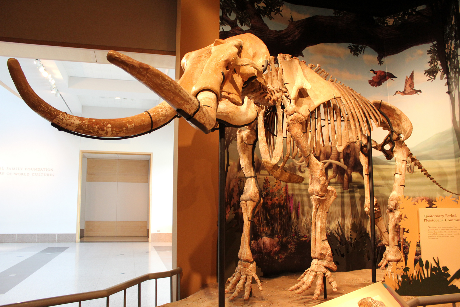 the ice age extinction of the megafauna That's the oft-repeated cutoff date for when much of the world's ice age megafauna – from mastodons to megatherium – faded away it's nice and neat, falling just after the close of the.