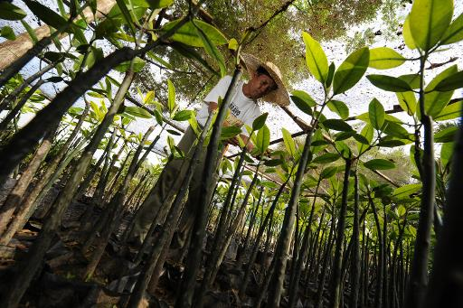 Philippines Breaks World Tree Planting Record