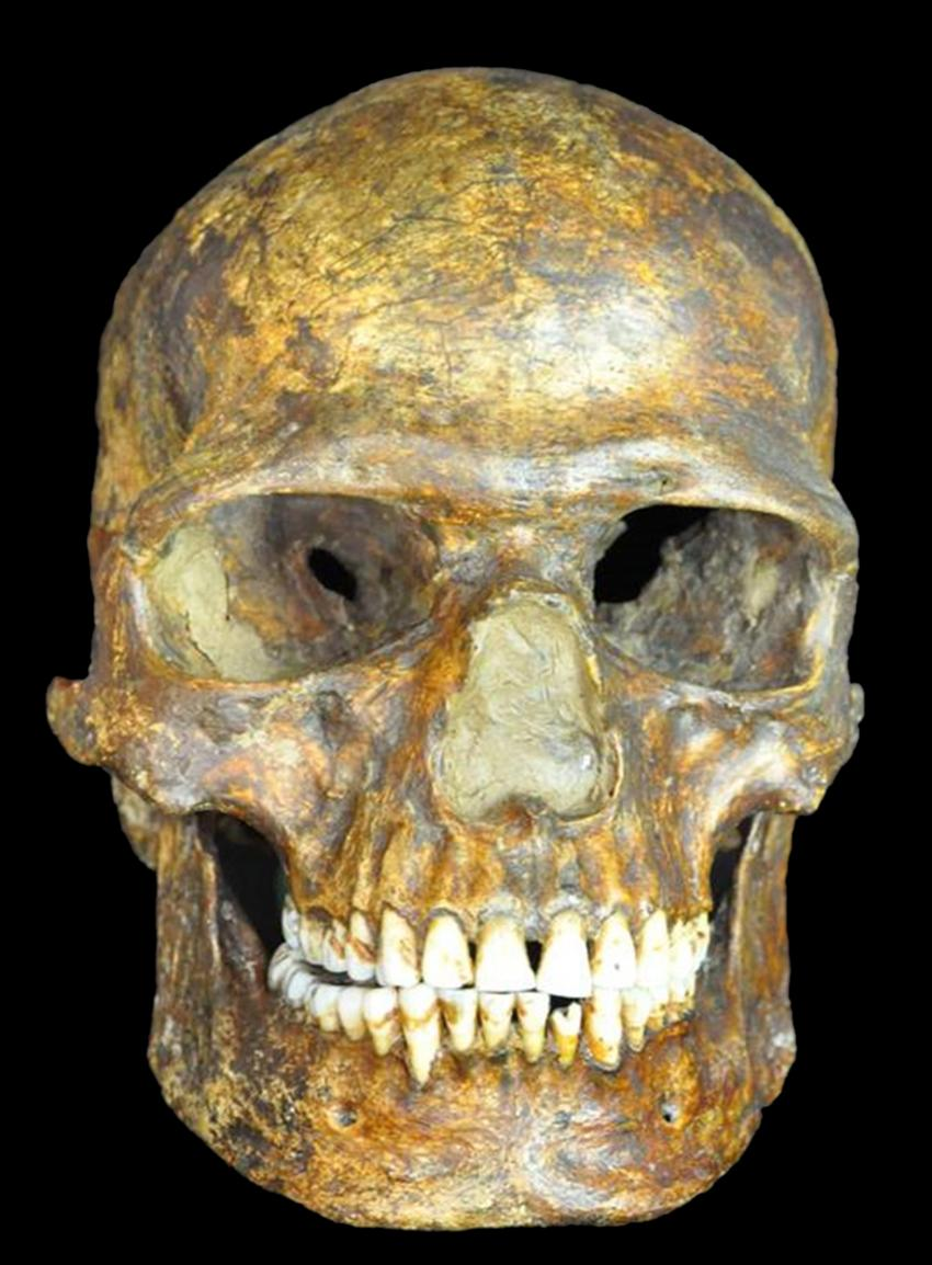 Neanderthal Ancestry Ancient DNA shows earl...