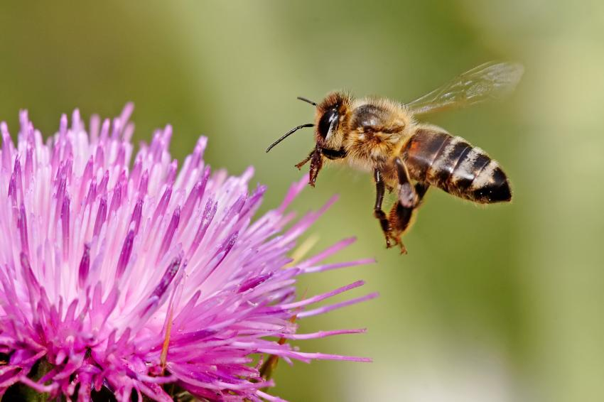 [Image: bee.jpg]