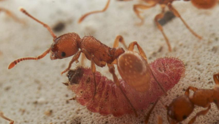how to make a queen ant move home