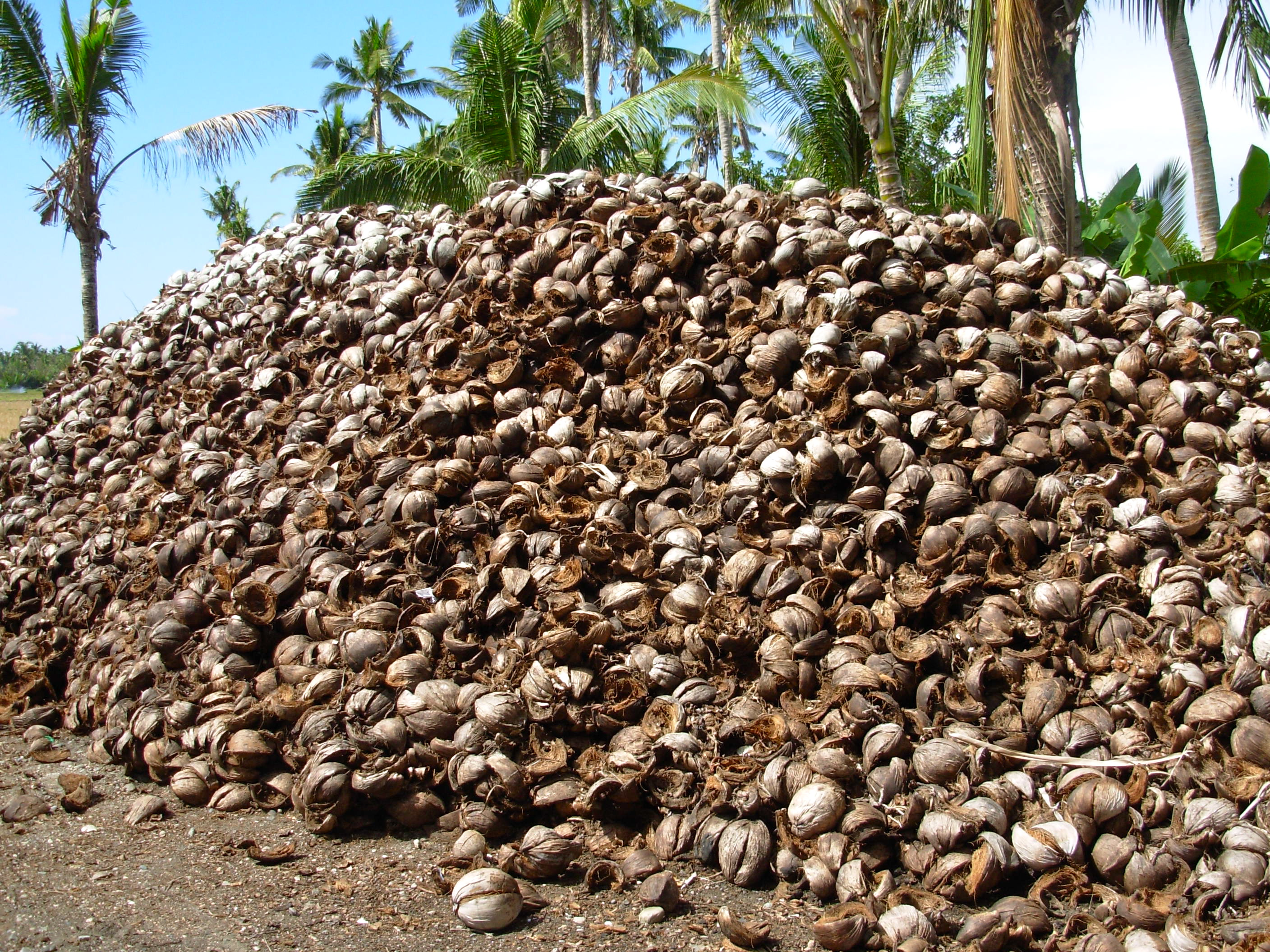Company converts coconut husk fibers into materials for for Waste material products