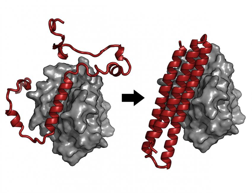 Computer-designed protein triggers self-destruction of Epstein-Barr-infected cancer cells