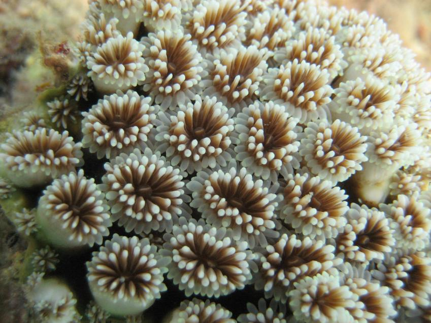 Scientists race to create more resilient coral to survive in warming oceans