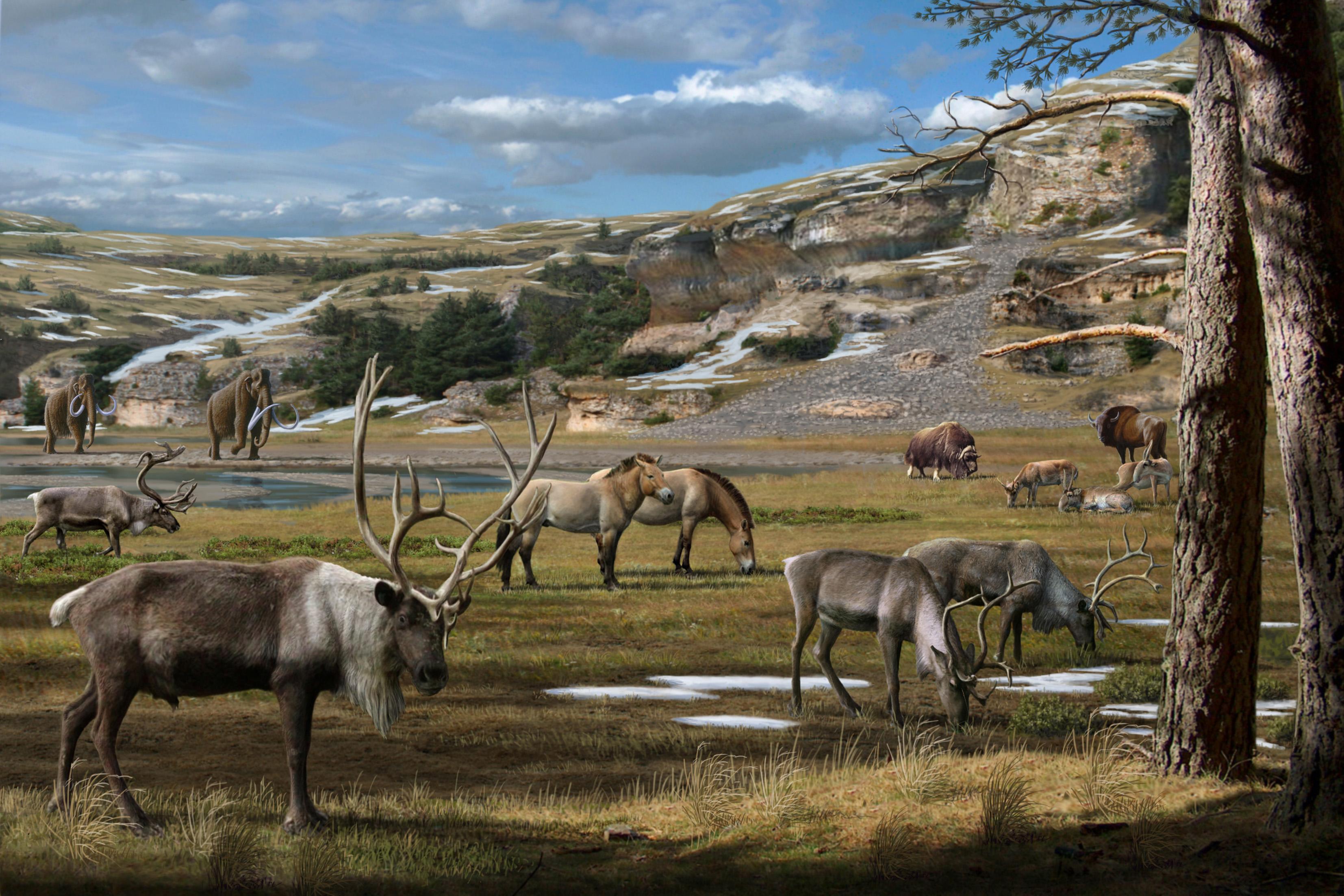 megafauna The latest tweets from megafauna (@mega_fauna) megafauna, il solito leccapensieri col mare dentro - contessa medaglini gondwana.