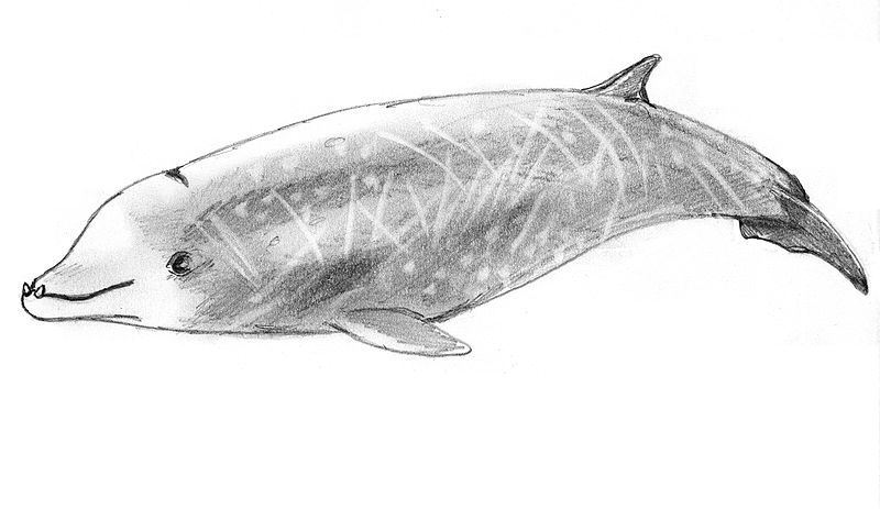 Cuvier's beaked whales set new breath-hold diving records