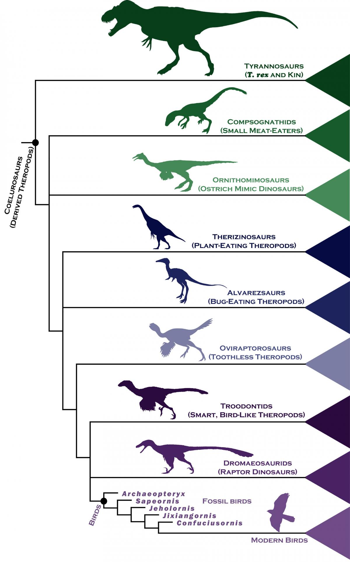 the relationship between birds and dinosaurs Relationship of reptiles and birds read about the similarities and differences between birds and reptiles and also the relationship between dinosaurs and birds.