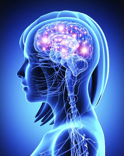 Brain Encodes Time And Place Of Taste Memory