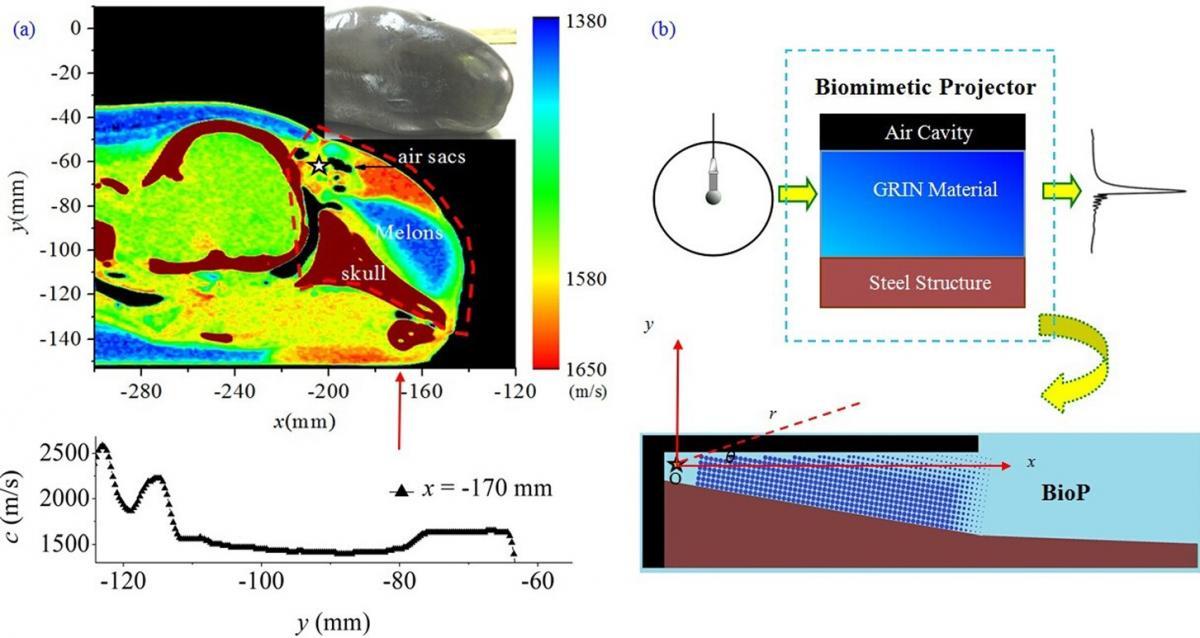 Dolphin Inspired Sonar Overcomes Size Wavelength Limitation