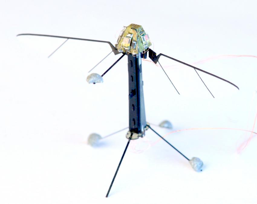 Researchers mimic insect ocelli to build light sensor to control fly ...