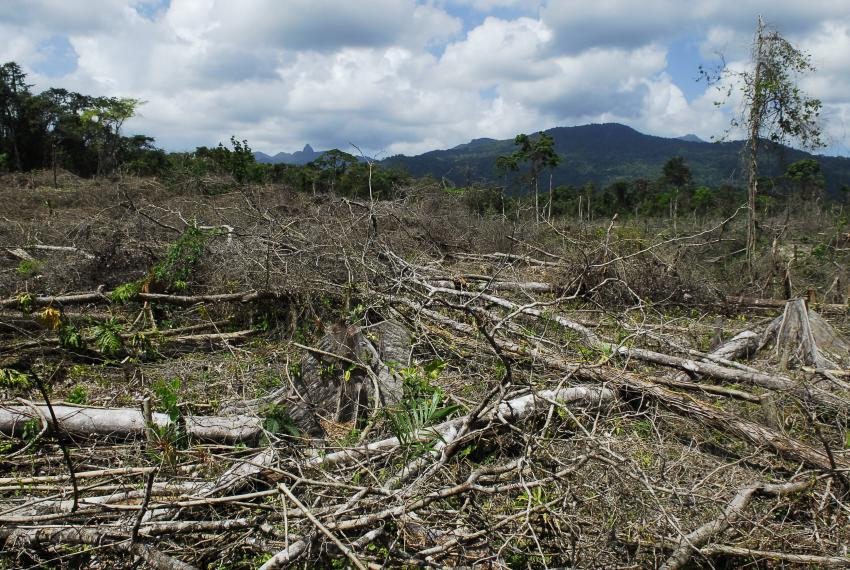 the issues of deforestation in russia brazil and canada Brazil: deforestation in amazon basin destroys the habitat of clean water and deforestation national security issues: in both the us and canada.
