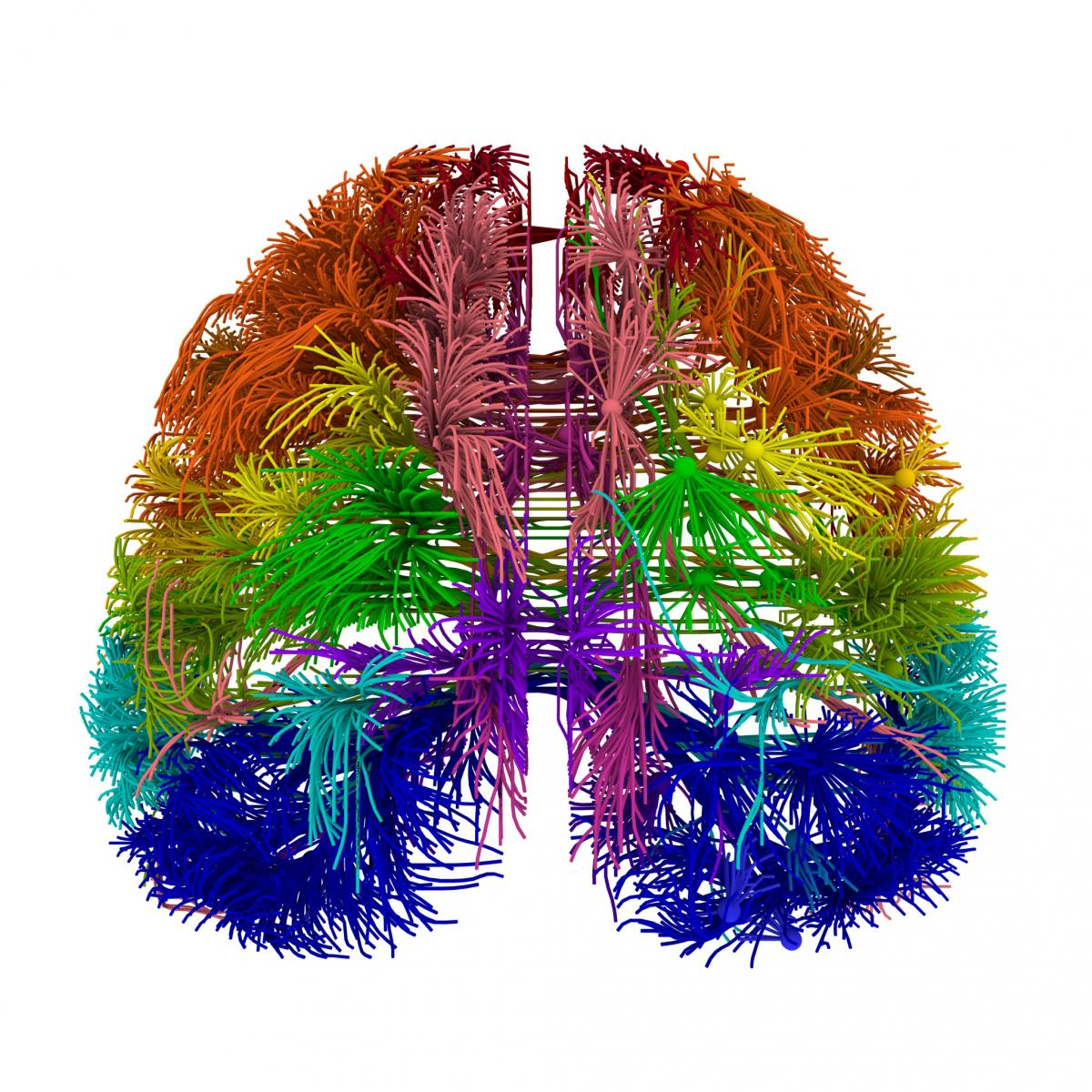 Research showcases most comprehensive wiring diagram of mammalian research showcases most comprehensive wiring diagram of mammalian brain to date ccuart Image collections