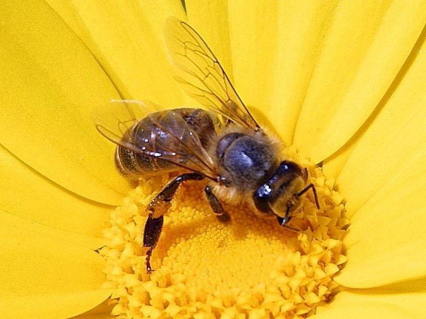 Bumblebee comics  Wikipedia