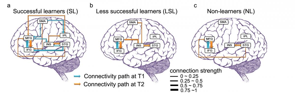 Learning languages is a workout for brains both young and old ccuart Images