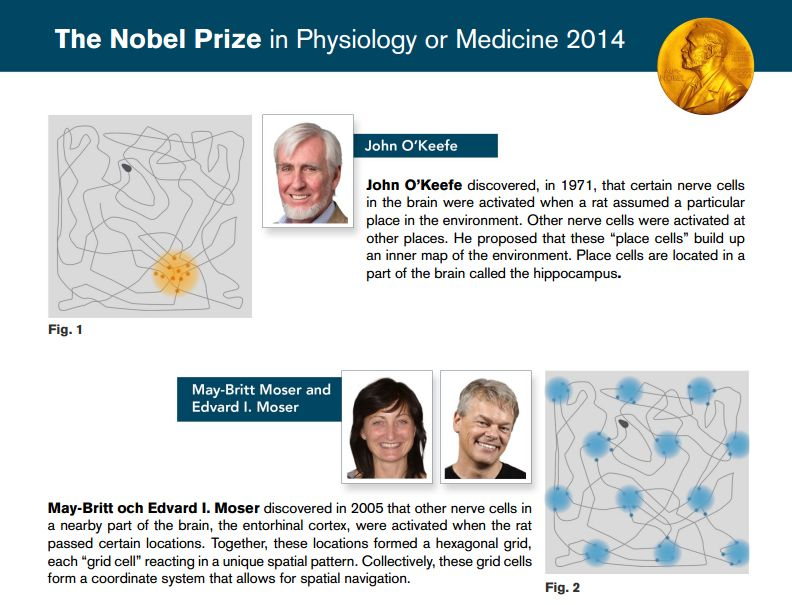 Trio win Nobel medicine prize for brain's 'GPS' (Update)