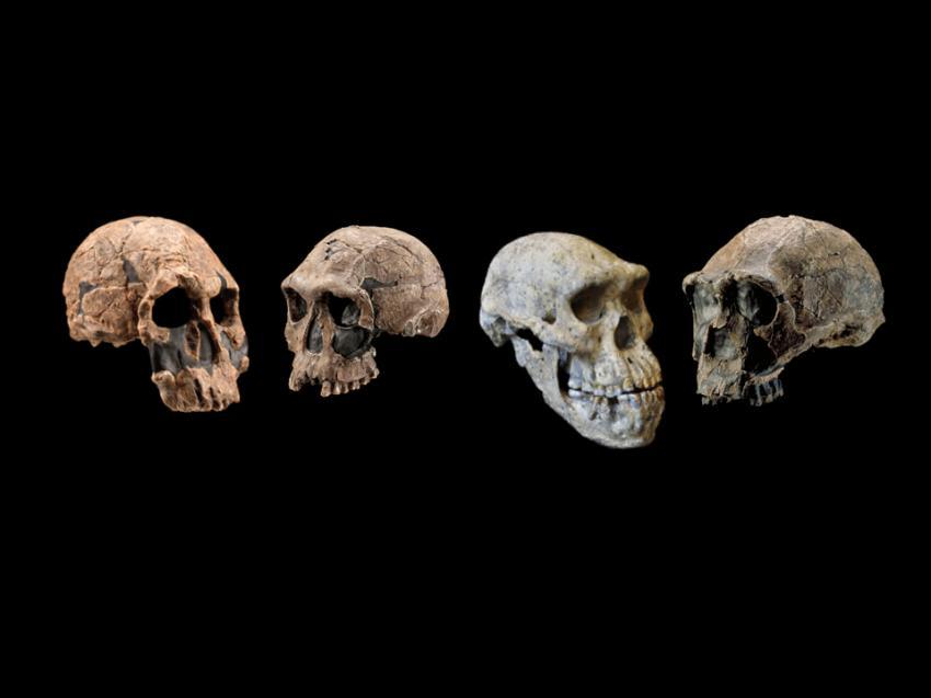 Scientists revise timeline of human origins 89a036b59b9