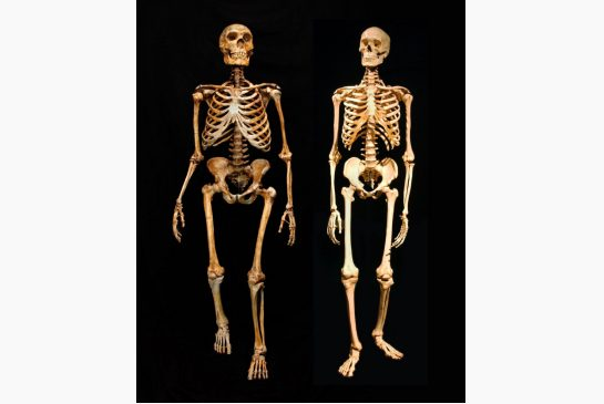 analysis of bones found in romania offer evidence of human and, Skeleton