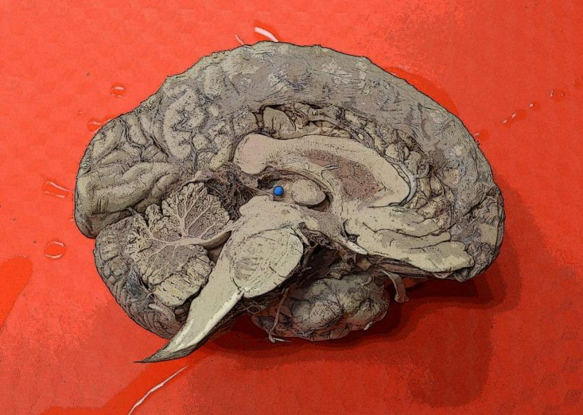 Neurobiology Online Course To Attempt Worlds Largest Memory Experiment