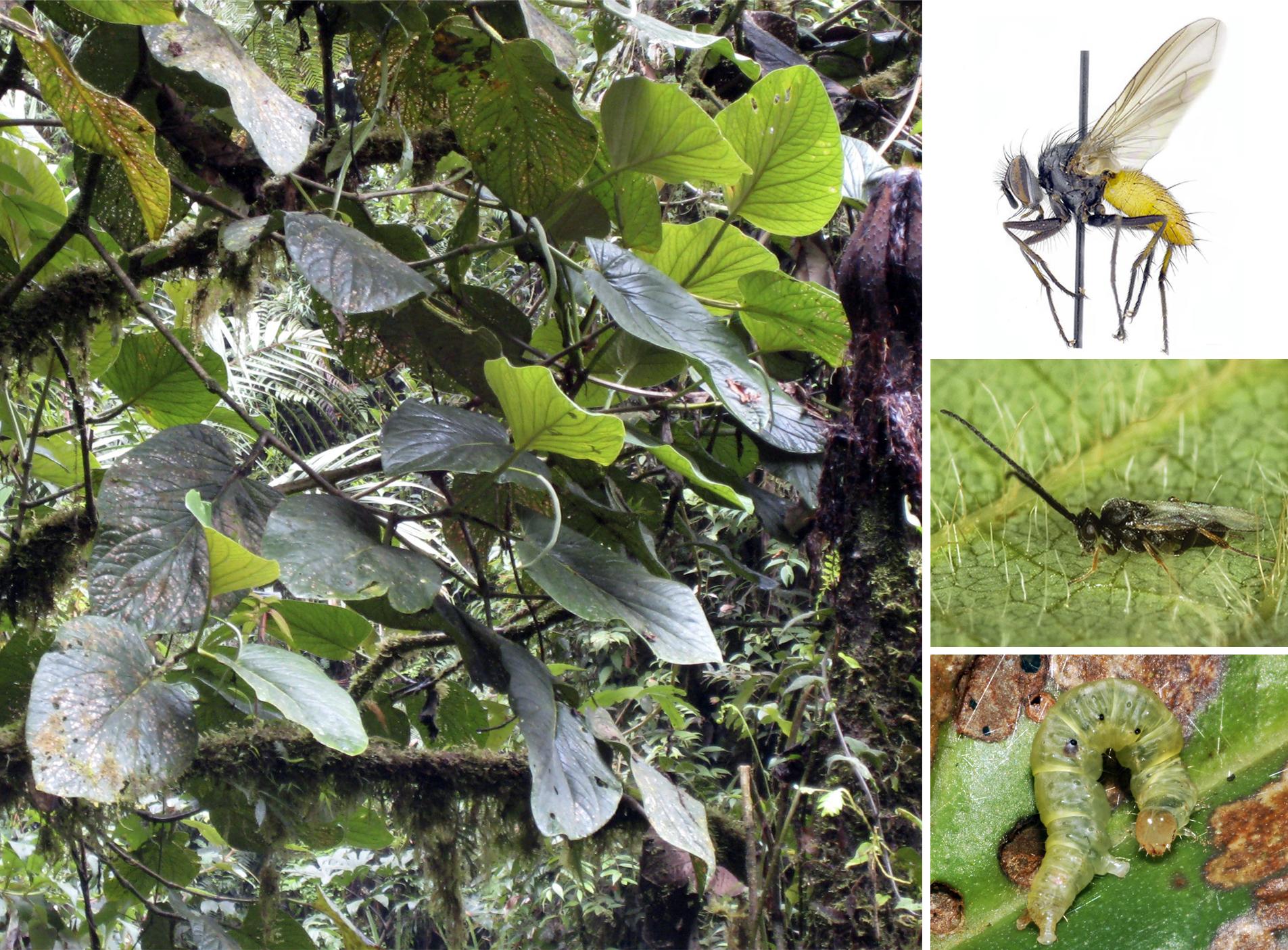 New Plant Species A Microcosm Of Biodiversity