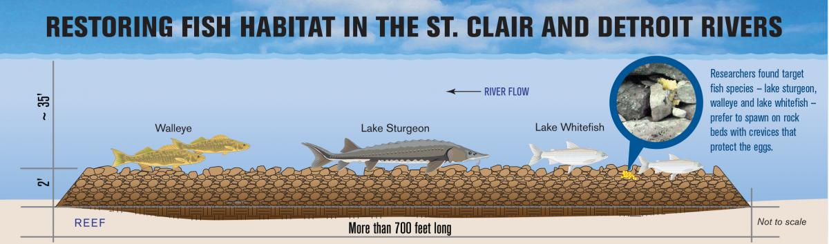New spawning reefs to boost native fish in st clair river for Detroit river fishing