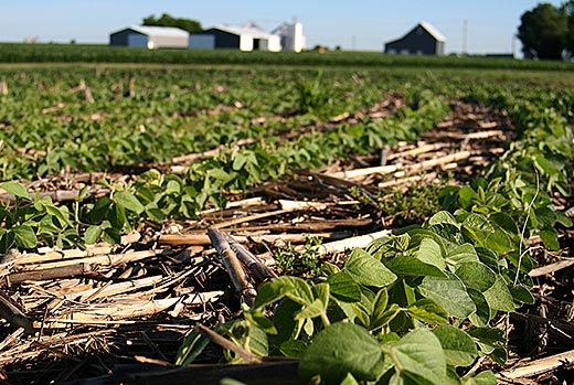 no till agriculture may not bring hoped for boost in global crop yields study finds