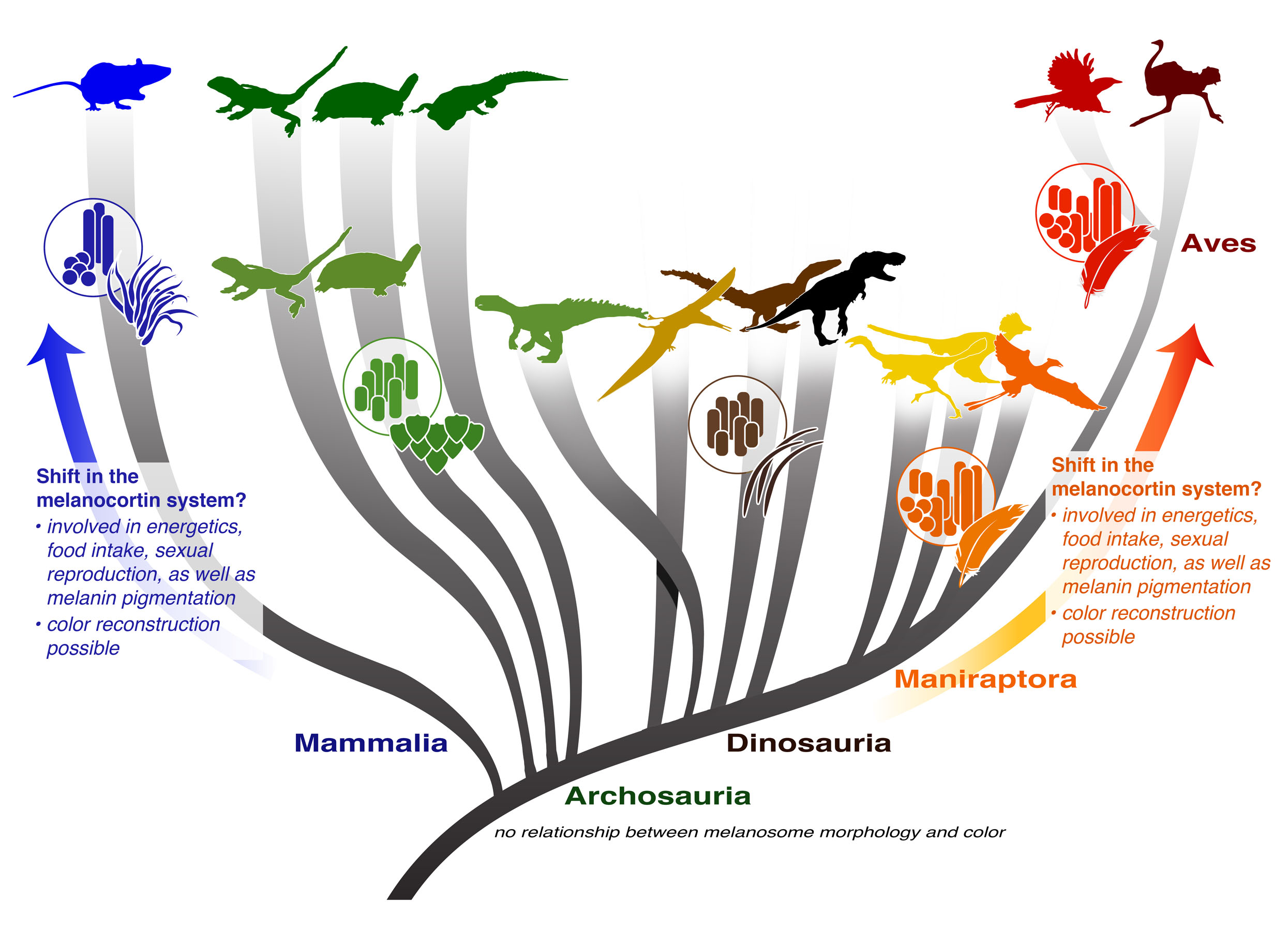 the relationship between birds and dinosaurs