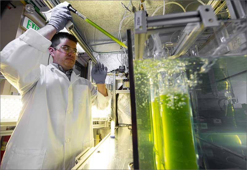 research papers on biofuels from algae Is algae the biofuel of the of renewable fuels coming from advanced biofuels that his team is looking into research on the beneficial reuse of co2 from.