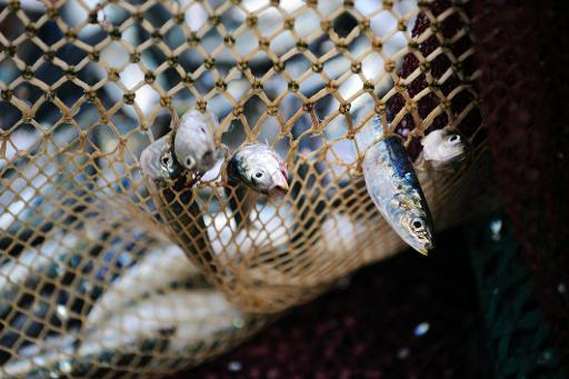 Eu proposes complete ban on drift net fishing for Drift net fishing