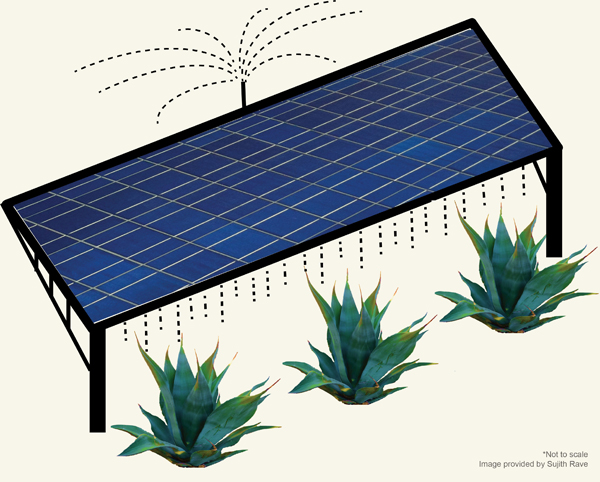A win-win situation: Growing crops on photovoltaic farms
