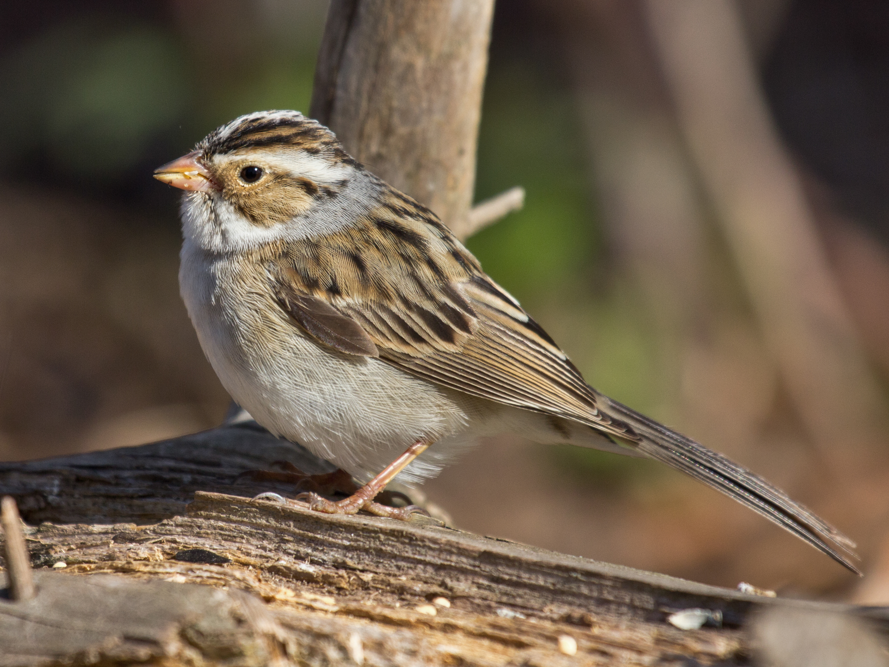 birds capitalize on weather patterns during epic migrations