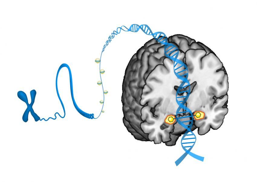 Small DNA modifications predict brain\'s threat response