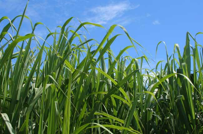Sugar Mill Feasibility Study